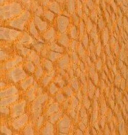 Brazilian lacewood